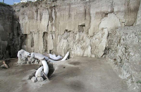 Tìm thấy hơn 200 bộ xương voi ma mút siêu khổng lồ gần nơi xây sân bay - Ảnh 2.