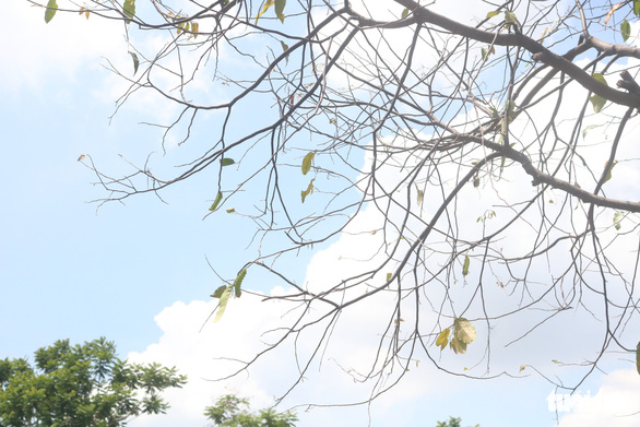 TP.HCM: Sâu ăn lá khiến hàng loạt cây xanh trơ trụi chỉ sau một đêm - Ảnh 6.