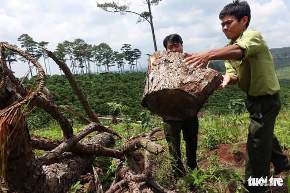 Lâm Đồng: Toàn bộ lãnh đạo một hạt kiểm lâm bị điều chuyển để điều tra phá rừng - Ảnh 1.