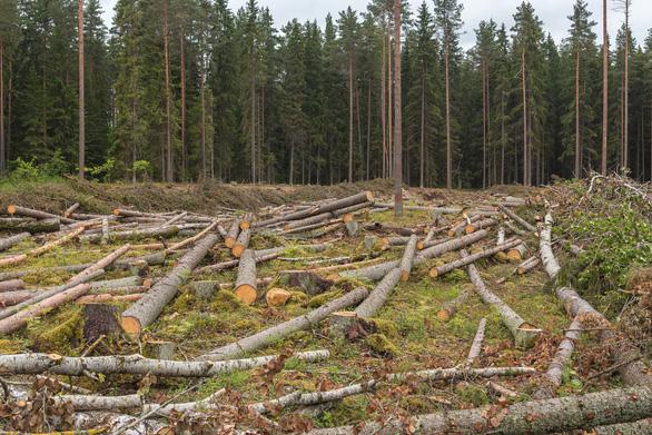 CO2 càng nhiều, cây xanh càng chết sớm - Ảnh 2.