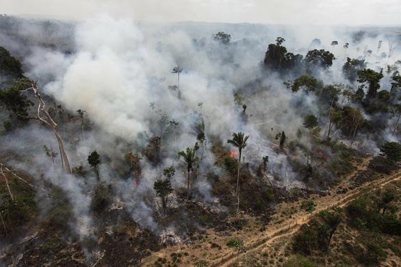 CO2 càng nhiều, cây xanh càng chết sớm - Ảnh 1.