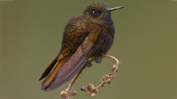 Loài chim kỳ quái khi ngủ tự giảm thân nhiệt 30 độ - Ảnh 2.