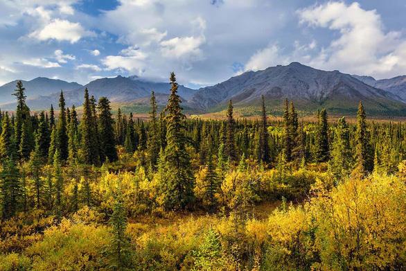 CO2 càng nhiều, cây xanh càng chết sớm - Ảnh 3.