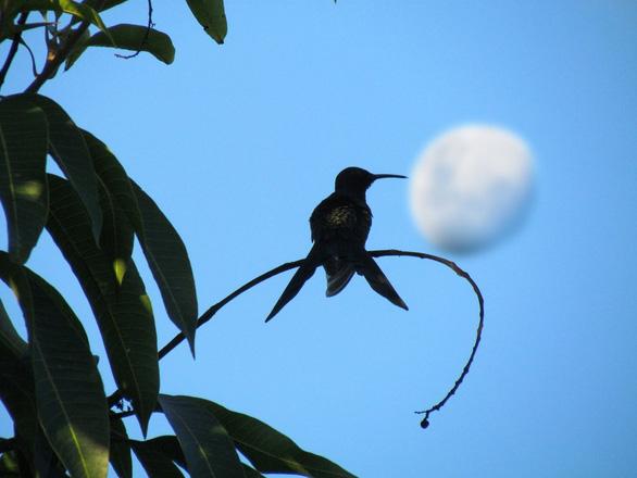 Loài chim kỳ quái khi ngủ tự giảm thân nhiệt 30 độ - Ảnh 1.