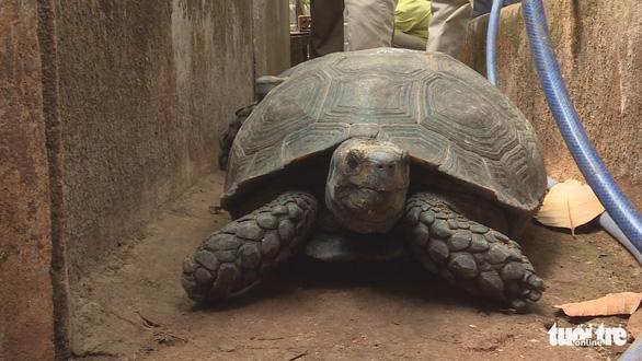 Nuôi nhốt hơn 100 con rùa quý hiếm, người đàn ông ở Buôn Ma Thuột bị khởi tố - Ảnh 2.