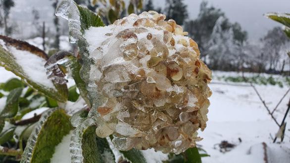 Nhiệt độ xuống dưới 0 độ C, tuyết rơi phủ trắng Y Tý - Ảnh 8.