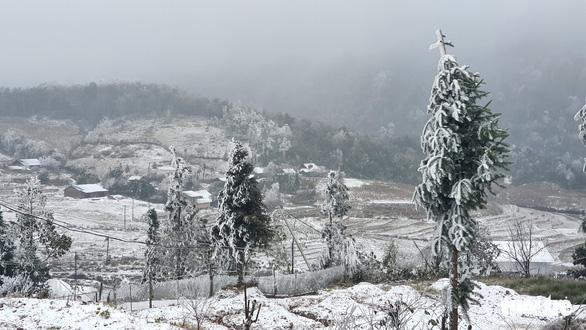 Trâu, bò chết rét do mưa tuyết, băng giá - Ảnh 1.