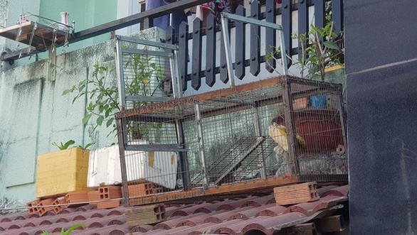 Xuất hiện đàn khỉ hơn chục con đại náo khu dân cư, dân tự chế lồng để bẫy - Ảnh 3.