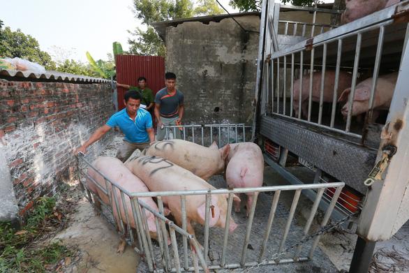 Giá thịt heo có tăng nhưng không đột biến như Tết 2020 - Ảnh 2.