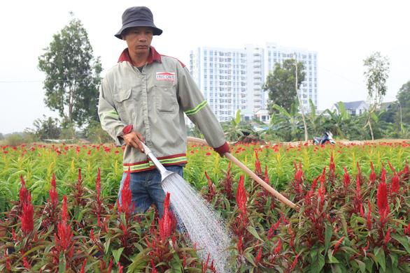 Đột kích làng hoa Sài Gòn đang khoe sắc, chờ Tết - Ảnh 7.