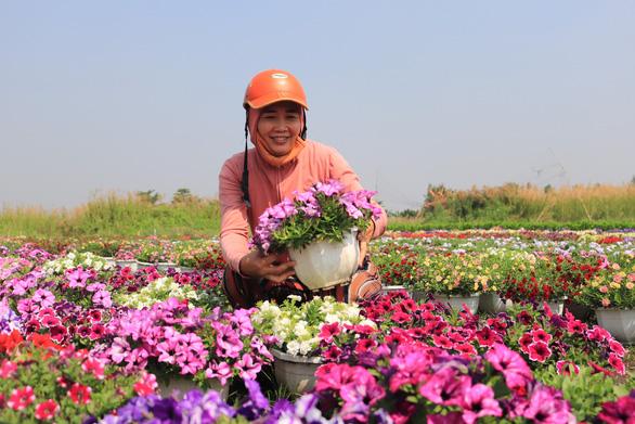 Đột kích làng hoa Sài Gòn đang khoe sắc, chờ Tết - Ảnh 8.