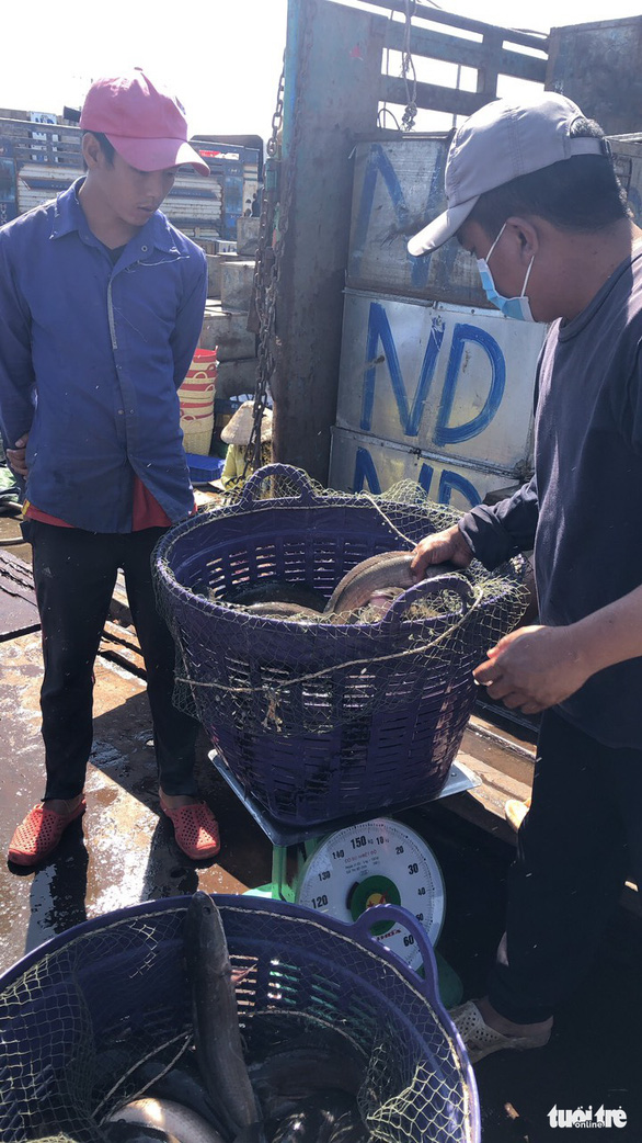 Campuchia cấm nhập khẩu một số loại cá da trơn, người nuôi ở miền Tây lo lắng - Ảnh 3.