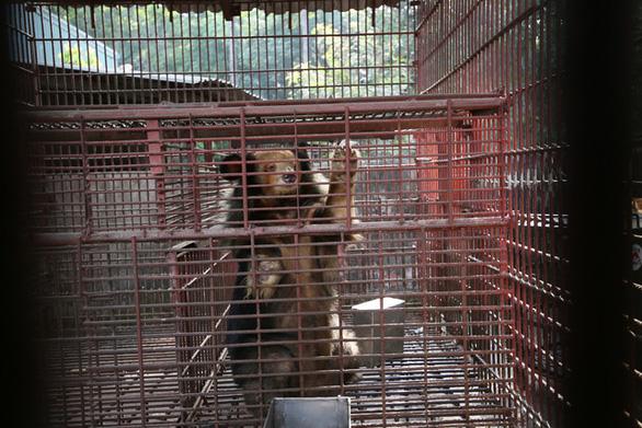 Chuyên gia Pháp: Việt Nam có nguy cơ cao lây bệnh truyền nhiễm từ động vật - Ảnh 1.