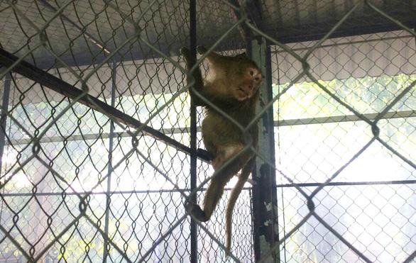 Người dân TP.HCM nơi đàn khỉ đại náo: Mong chúng được đoàn tụ nơi rừng xanh - Ảnh 3.