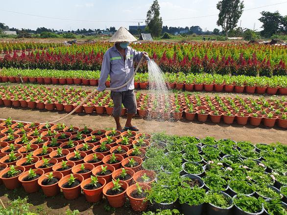 Nhộn nhịp làng hoa Sài Gòn - Ảnh 1.