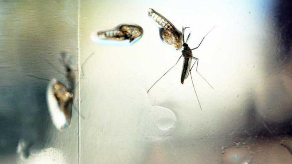 Phát hiện kháng thể ngăn chặn cả 4 chủng virus gây bệnh sốt xuất huyết - Ảnh 1.