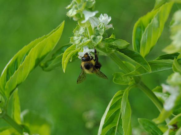 Giới khoa học 'báo động đỏ' số lượng côn trùng giảm nghiêm trọng - Ảnh 3.