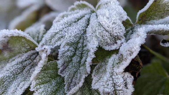 Nhiệt độ xuống -2 độ C, băng giá phủ trắng đỉnh Phja Oắc, Cao Bằng - Ảnh 1.