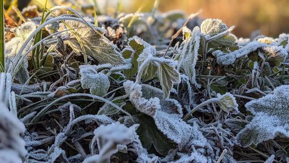 Nhiệt độ xuống -2 độ C, băng giá phủ trắng đỉnh Phja Oắc, Cao Bằng - Ảnh 3.