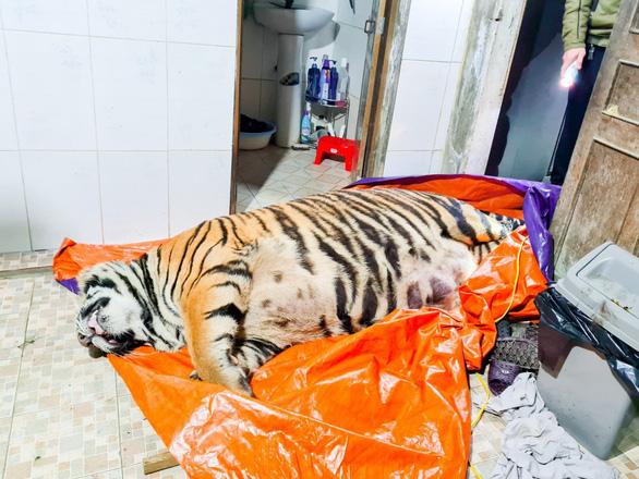 Con hổ nặng hơn 2 tạ rưỡi nghi bị chích điện, chủ nhà khai mua về nấu cao - Ảnh 2.