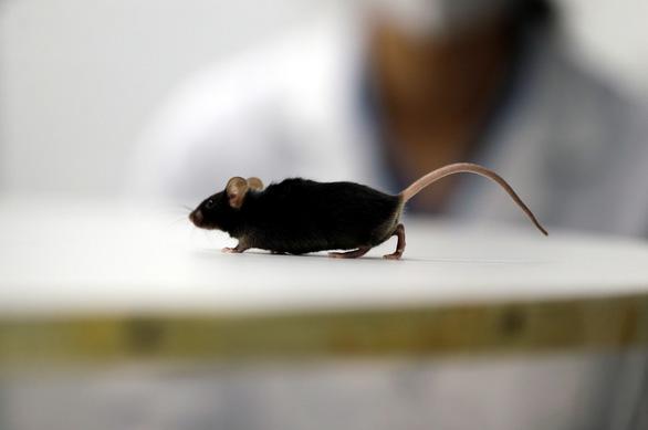 Nghiên cứu mới giúp chuột bị liệt đi lại được, mở ra hi vọng cho người - Ảnh 2.