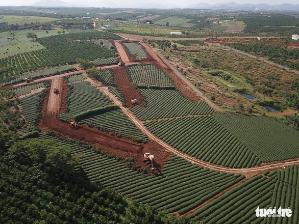 Chủ tịch tỉnh Lâm Đồng giao công an điều tra việc phá nát thủ phủ chè Bảo Lộc - Ảnh 3.