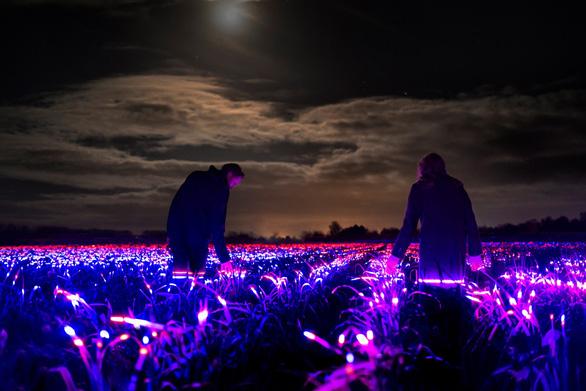 Dự án Grow với cánh đồng phát sáng vào ban đêm tại Hà Lan - Ảnh 1.