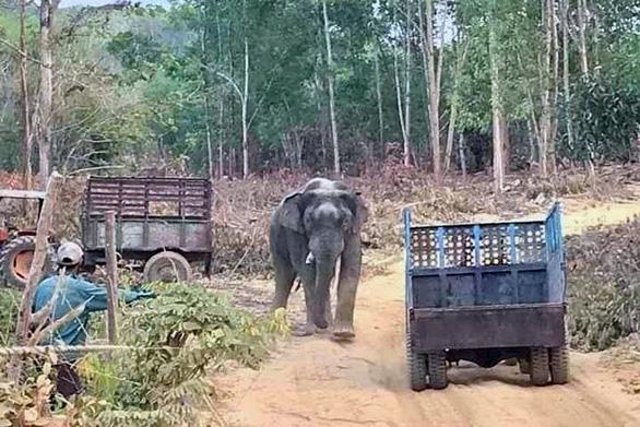Chi hơn 3,1 tỉ hỗ trợ 127 hộ dân bị thiệt hại do voi rừng - Ảnh 1.