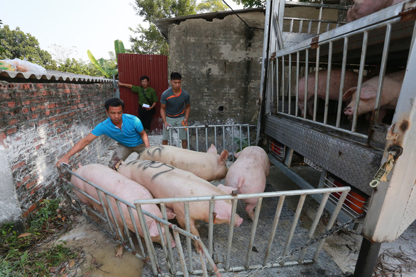 Thủ tướng yêu cầu ngăn chặn tình trạng heo Việt Nam tuồn qua Trung Quốc - Ảnh 1.