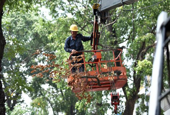 TP.HCM xử lý các đơn vị lấn chiếm, trả lại mặt bằng cho công viên - Ảnh 2.