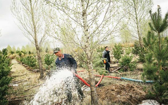 Cuộc chiến phủ lại rừng xanh - Kỳ 1: Mối nguy cây độc canh và Vạn lý trường thành xanh - Ảnh 3.