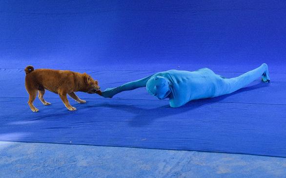 Hậu trường gay cấn khi chú chó đóng Cậu Vàng đối mặt với bó đuốc, đàn trâu - Ảnh 3.