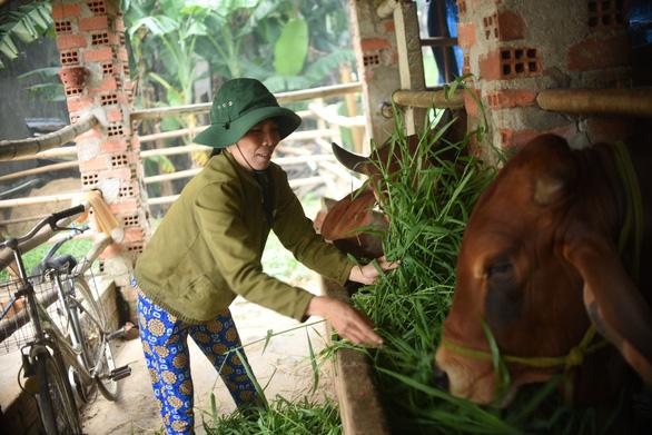 Nông dân Bình Định quyết tâm vượt qua nghịch cảnh với vốn vay từ GreenFeed - Ảnh 2.