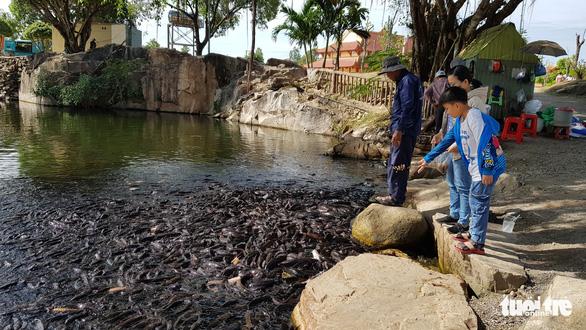 Hàng ngàn con cá trê đen nổi sệt trên mặt hồ trong thiền viện Trúc Lâm - Ảnh 3.