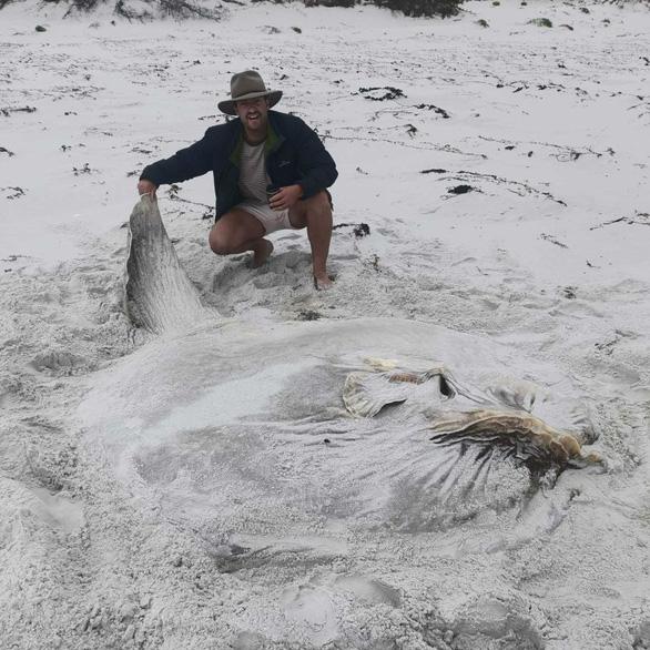 Loài cá quái vật nặng hàng tấn và siêu lười - Ảnh 2.