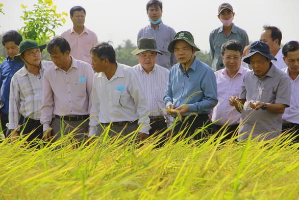 Kỹ sư Hồ Quang Cua trải lòng với Bộ trưởng NN-PTNT chuyện gạo ST25 rớt hạng - Ảnh 2.