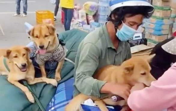 Vụ tiêu hủy chó ở Cà Mau: Chưa có bằng chứng nói động vật nhiễm COVID-19 lây sang người - Ảnh 1.
