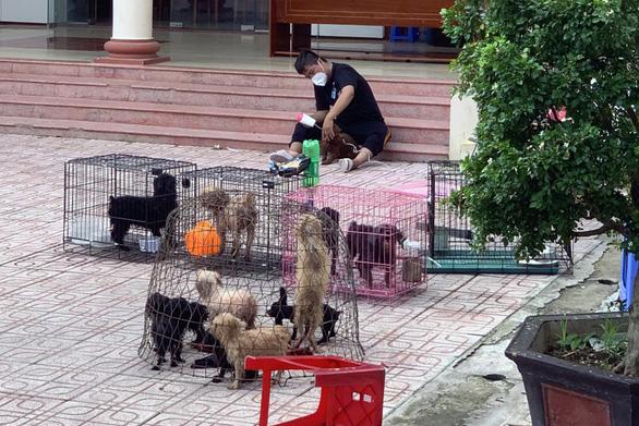Chủ F0 đi cách ly, đàn chó 12 con được chăm sóc, tắm rửa: Để nó chết sao được - Ảnh 1.