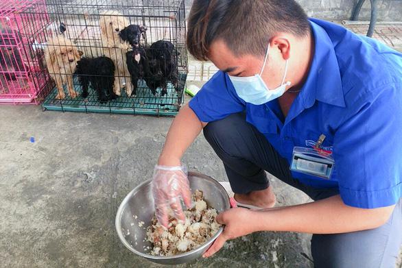 Chủ F0 đi cách ly, đàn chó 12 con được chăm sóc, tắm rửa: Để nó chết sao được - Ảnh 2.