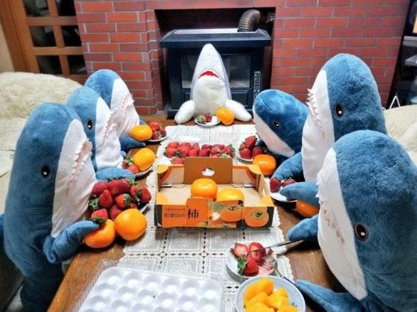 Hàng chục triệu dân mạng phát sốt vì sợ mất chú cá mập xanh nhồi bông - Ảnh 1.
