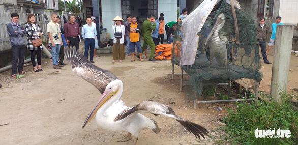 Sợ truông Nhà Hồ sợ phá Tam Giang - Kỳ 5: Đầm phá linh thiêng cho chim quý bay về - Ảnh 1.