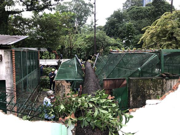 Cây xanh lớn bật gốc đè sập chuồng thú trong Thảo Cầm Viên Sài Gòn - Ảnh 1.