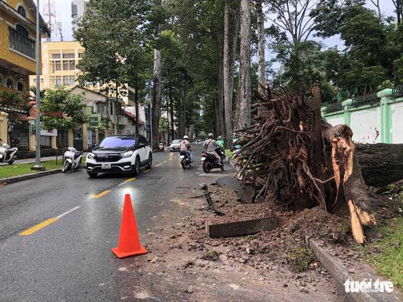 Cây xanh lớn bật gốc đè sập chuồng thú trong Thảo Cầm Viên Sài Gòn - Ảnh 2.