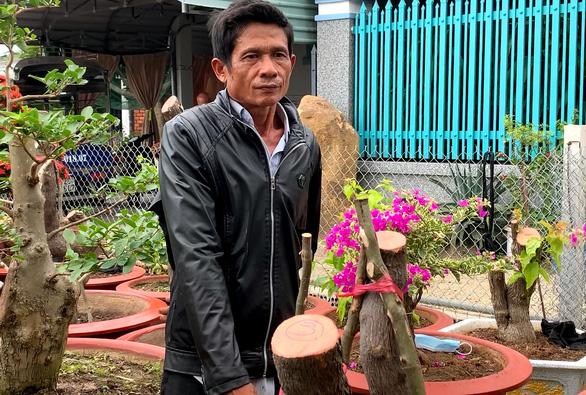 Cưa trộm hàng chục cây hoa giấy trang trí của thành phố đem về ươm bán - Ảnh 1.