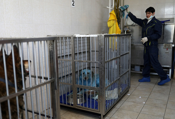 Bầy chó màu xanh gây sửng sốt ở Nga - Ảnh 5.