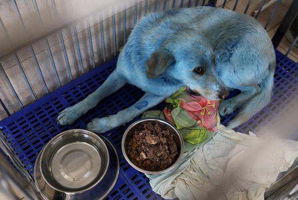 Bầy chó màu xanh gây sửng sốt ở Nga - Ảnh 4.