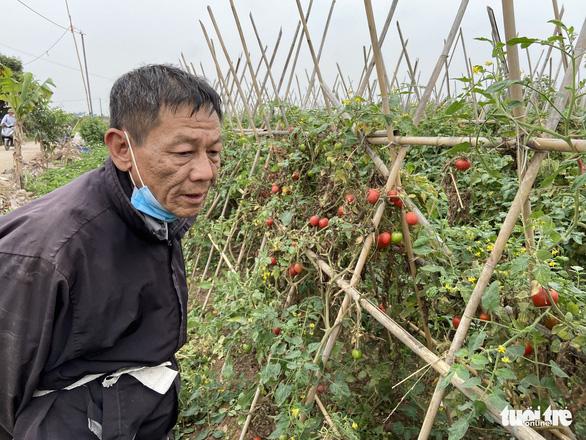 Nhà hàng, quán ăn đóng cửa, dân trồng rau Hà Nội đứt ruột ngóng thương lái - Ảnh 2.