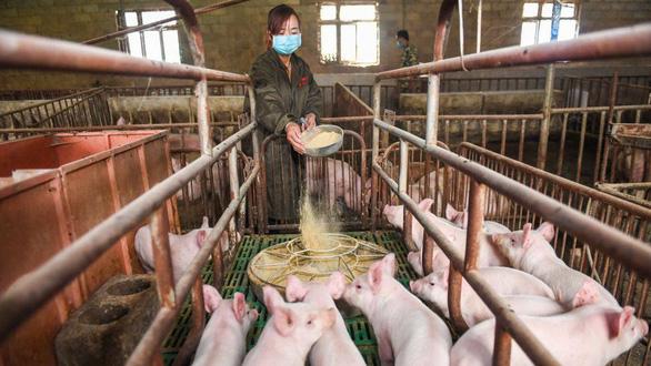 Doanh số điện thoại thông minh giảm, Huawei chuyển sang các trại nuôi heo - Ảnh 1.