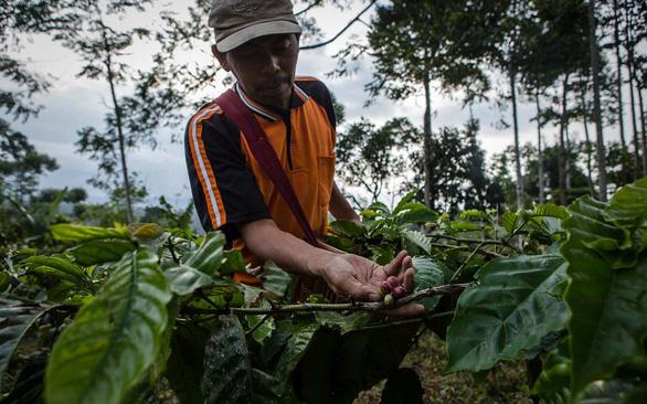 Cuộc chiến phủ lại rừng xanh - Kỳ 4: Giao lưỡi cưa hay giao đất rừng cho cộng đồng? - Ảnh 1.