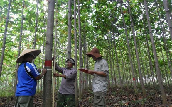 Cuộc chiến phủ lại rừng xanh - Kỳ 4: Giao lưỡi cưa hay giao đất rừng cho cộng đồng? - Ảnh 3.